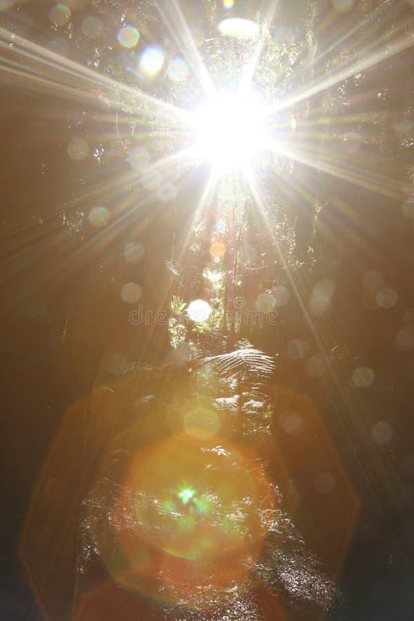 Δασικές φωτεινές ελαφριές ακτίνες στοκ φωτογραφία