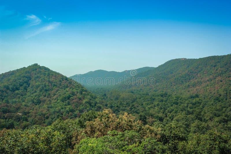 Δασική άποψη λόφων πόλο στοκ φωτογραφία