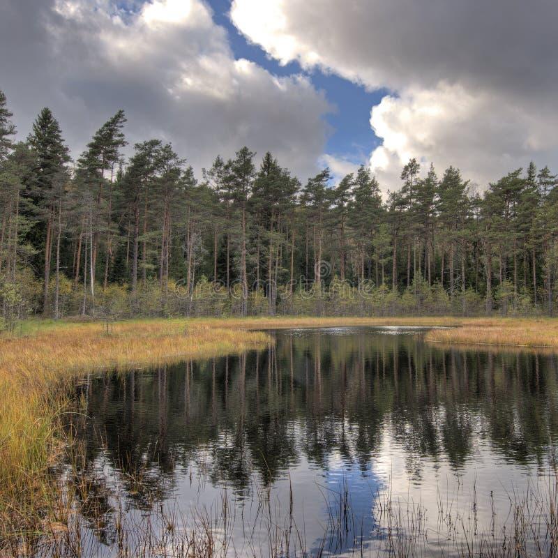 Δασική λίμνη με τα πεύκα σε HDR στοκ εικόνες με δικαίωμα ελεύθερης χρήσης