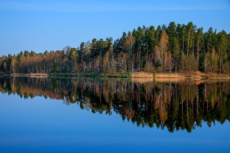 Δασική αντανάκλαση στη λίμνη στοκ φωτογραφία με δικαίωμα ελεύθερης χρήσης
