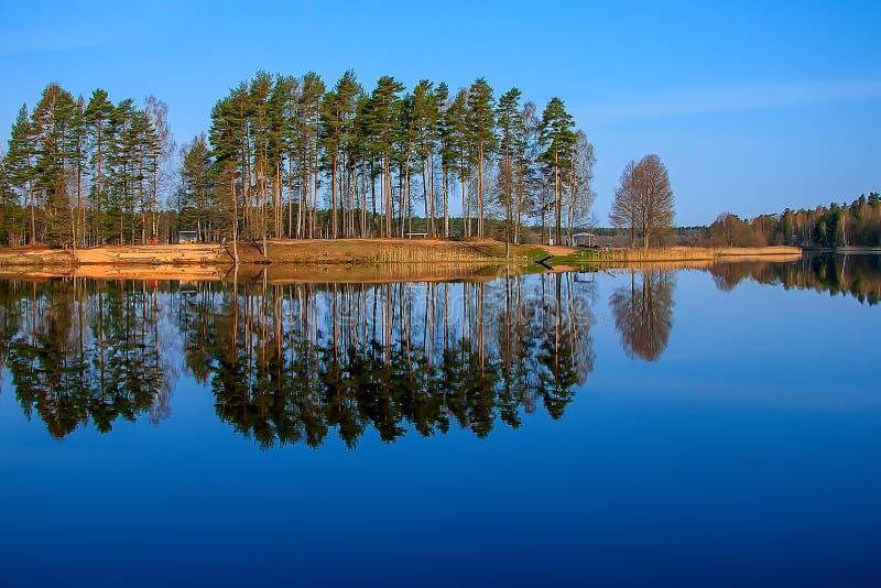 Δασική αντανάκλαση στη λίμνη στοκ εικόνες με δικαίωμα ελεύθερης χρήσης