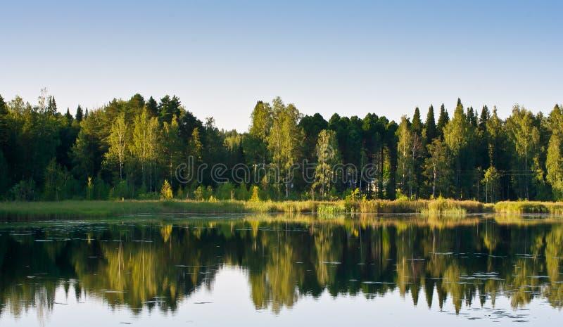 δασική απεικόνιση λιμνών στοκ εικόνες