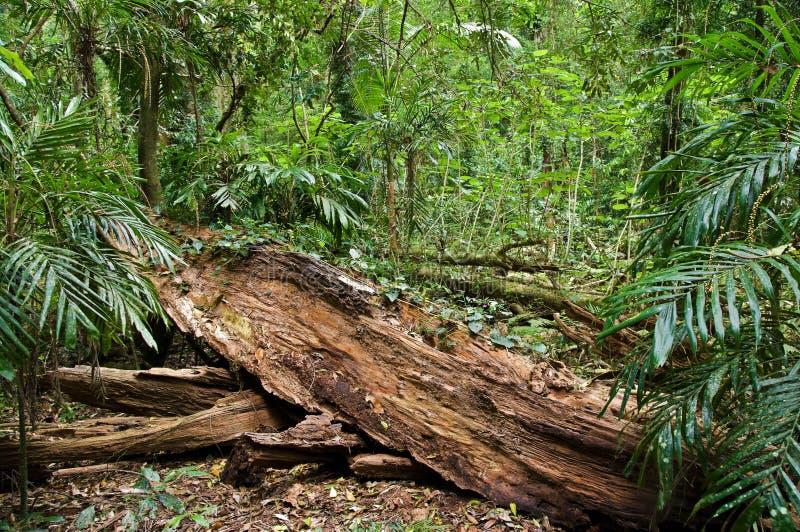 δασική βροχή κούτσουρων στοκ εικόνα με δικαίωμα ελεύθερης χρήσης