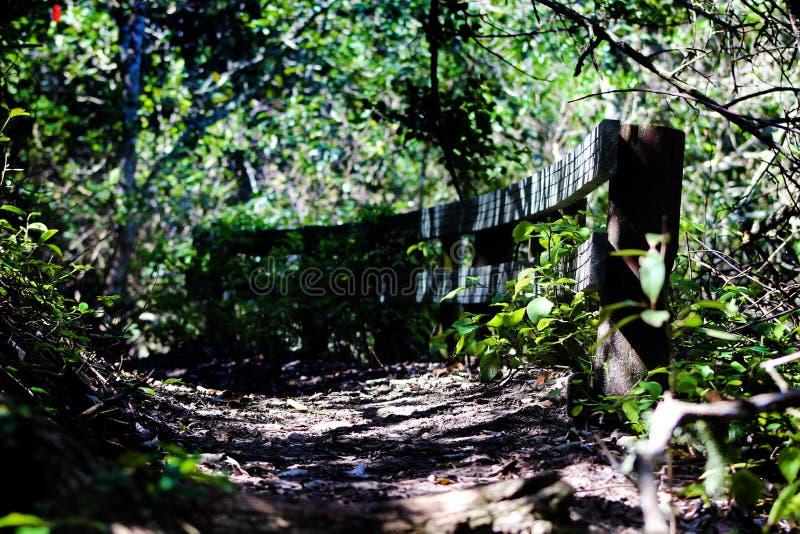 Δασική διάβαση πεζών στοκ φωτογραφία
