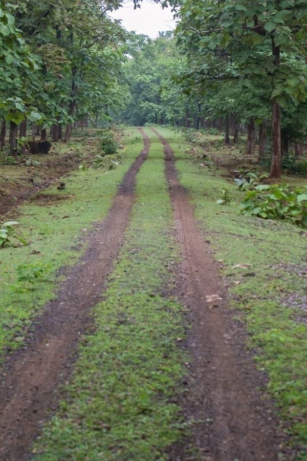 Δασική διαδρομή ή πορεία με Teak τα δέντρα στο εθνικό πάρκο της Ινδίας στοκ εικόνες με δικαίωμα ελεύθερης χρήσης