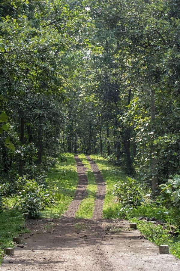 Δασική διαδρομή ή πορεία με Teak τα δέντρα στο εθνικό πάρκο της Ινδίας στοκ εικόνες