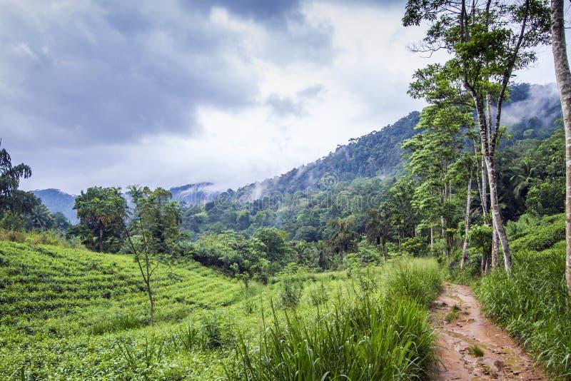 Δασική επιφύλαξη Sinharaja, Σρι Λάνκα στοκ εικόνα με δικαίωμα ελεύθερης χρήσης