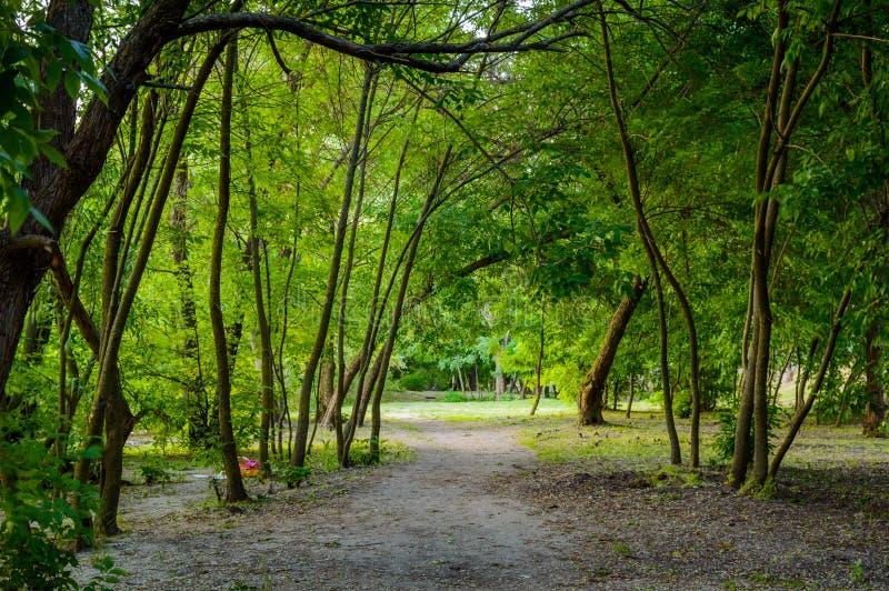 Δασική διάβαση στη σκιά των δέντρων πριν από το ηλιοβασίλεμα στοκ φωτογραφίες με δικαίωμα ελεύθερης χρήσης