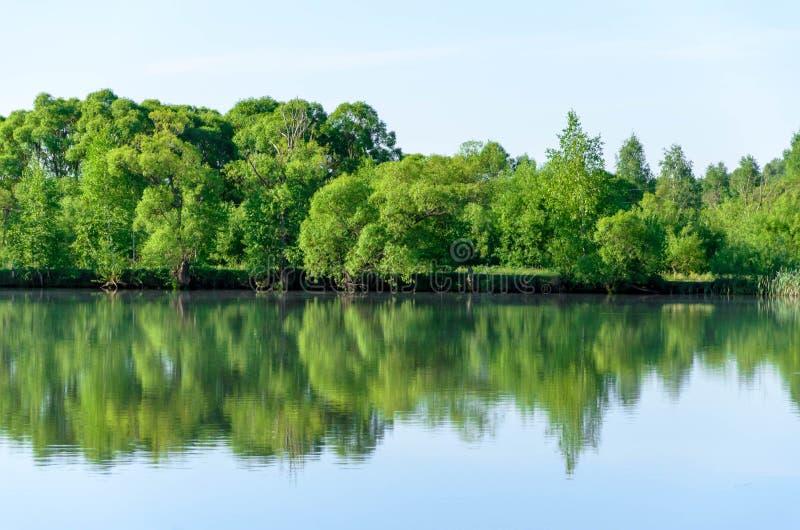Δασική λίμνη κατά τη θερινή άποψη, τοπίο στοκ εικόνες