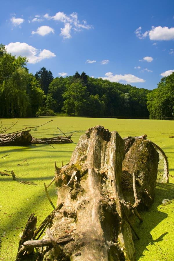 Download δασική λίμνη στοκ εικόνες. εικόνα από πράσινος, κούτσουρο - 13183324