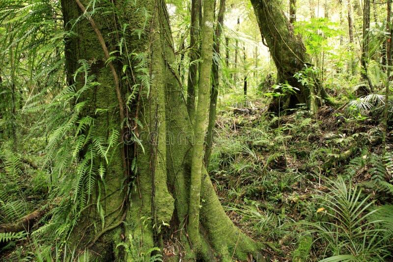 δασική Νέα Ζηλανδία στοκ φωτογραφία με δικαίωμα ελεύθερης χρήσης