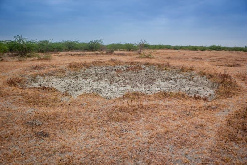 Δασική ξηρασία στοκ φωτογραφία με δικαίωμα ελεύθερης χρήσης