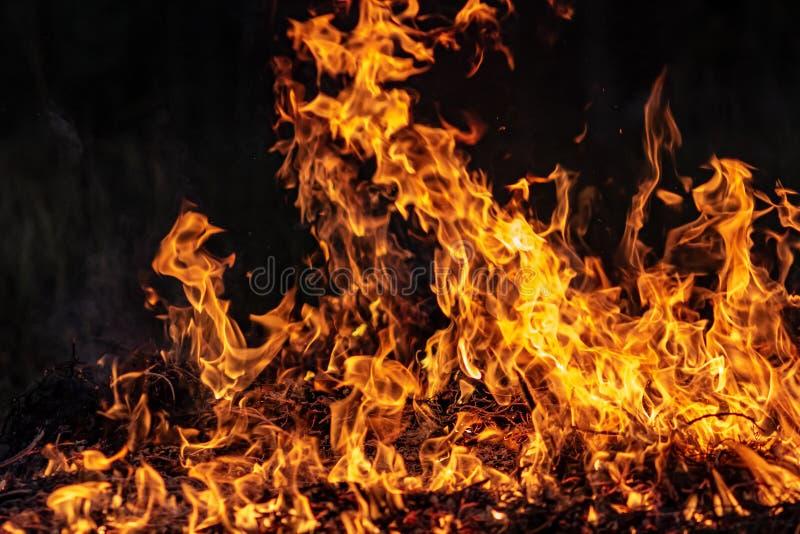 Δασική ολόκληρη περιοχή πυρκαγιών τη νύχτα που καλύπτεται από τη φλόγα και τα σύννεφα του σκοτεινού καπνού Διαστρεβλωμένος οφειλό στοκ εικόνες με δικαίωμα ελεύθερης χρήσης