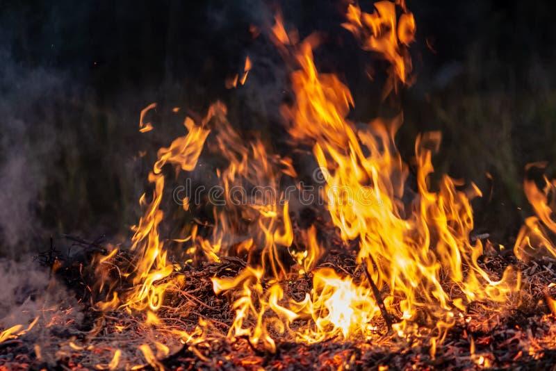 Δασική ολόκληρη περιοχή πυρκαγιών τη νύχτα που καλύπτεται από τη φλόγα και τα σύννεφα του σκοτεινού καπνού Διαστρεβλωμένος οφειλό στοκ εικόνες