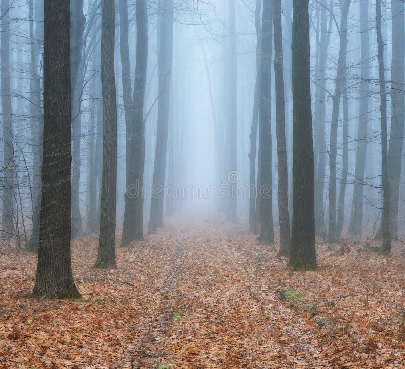 Δασική ομίχλη στο γραφικό δάσος φθινοπώρου στοκ φωτογραφία