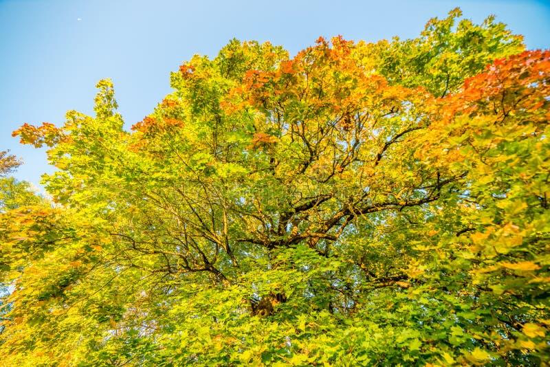 Δασική ομορφιά πτώσης στοκ φωτογραφία με δικαίωμα ελεύθερης χρήσης
