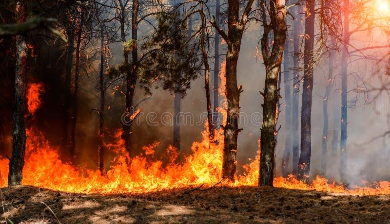 Δασική πυρκαγιά Μμένα δέντρα μετά από την πυρκαγιά, τη ρύπανση και πολύ καπνό στοκ φωτογραφίες