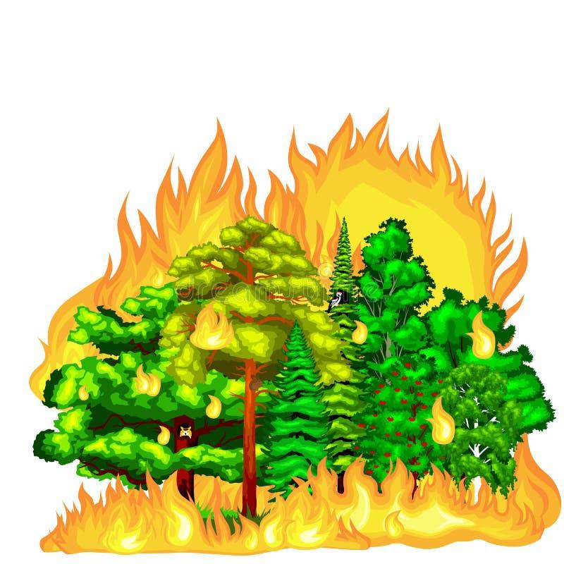 Δασική πυρκαγιά, πυρκαγιά στη δασική ζημία τοπίων, καταστροφή οικολογίας φύσης, καυτά καίγοντας δέντρα, φλόγα δασικής πυρκαγιάς κ απεικόνιση αποθεμάτων