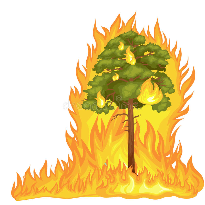 Δασική πυρκαγιά ελεύθερη απεικόνιση δικαιώματος