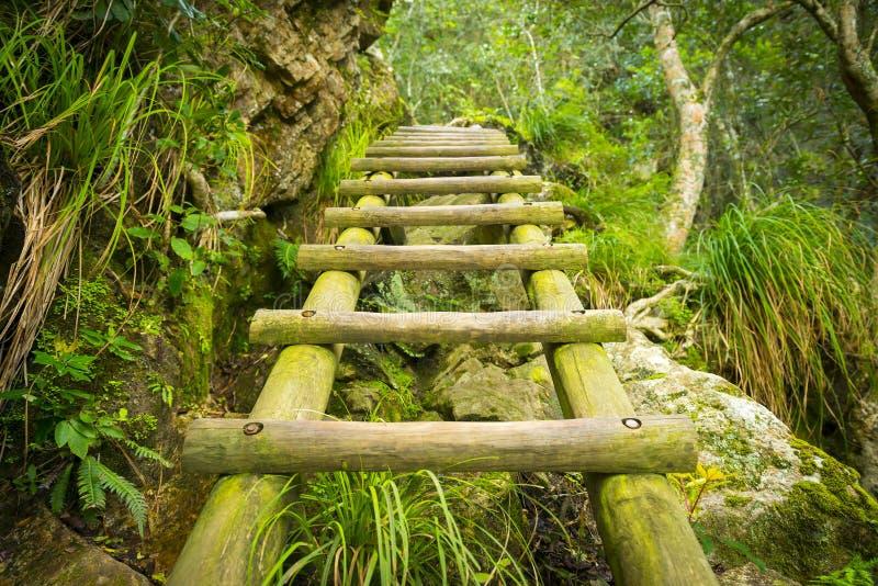 Δασική σκάλα βημάτων στοκ εικόνες
