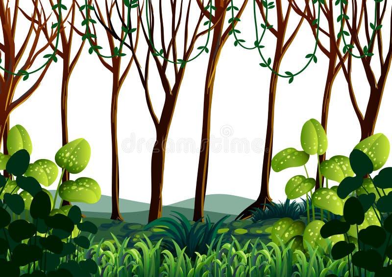 Δασική σκηνή με τα πράσινα δέντρα ελεύθερη απεικόνιση δικαιώματος