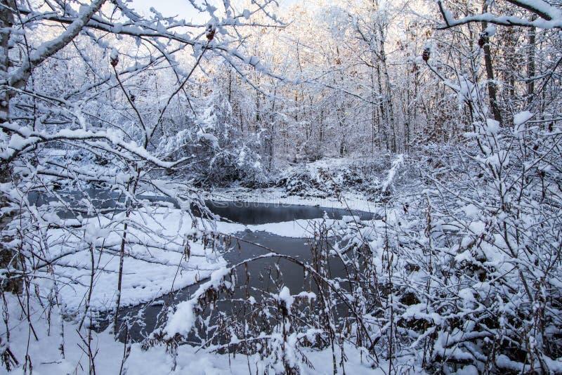 Δασική σκηνή χειμερινών χωρών των θαυμάτων του Μίτσιγκαν στοκ φωτογραφία με δικαίωμα ελεύθερης χρήσης