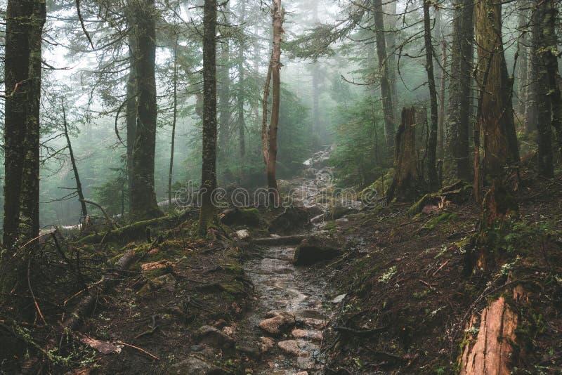 Δασική φύση στοκ εικόνα