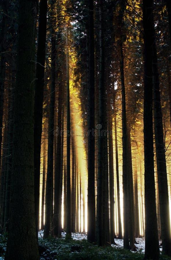 δασική misty φύση ανασκόπησης στοκ εικόνα