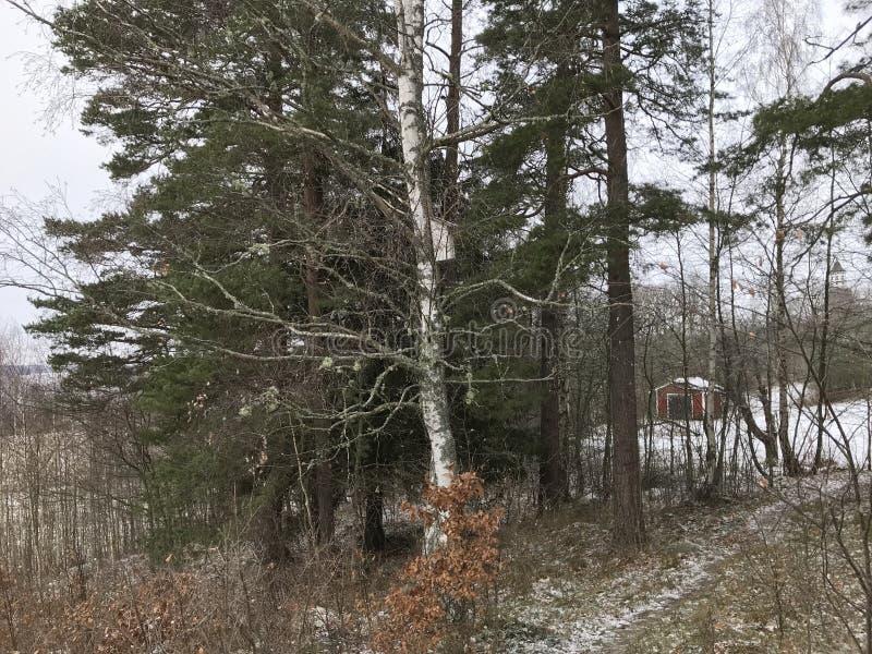 Δασική smal ημέρα χιονιού σπιτιών δέντρων vinter στοκ φωτογραφίες με δικαίωμα ελεύθερης χρήσης