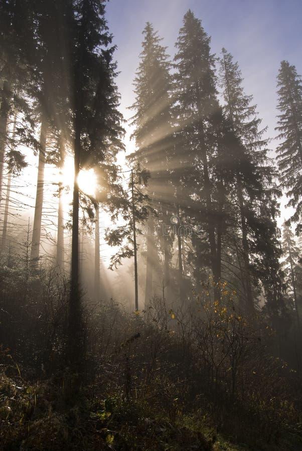 δασικός ήλιος ακτίνων στοκ φωτογραφίες με δικαίωμα ελεύθερης χρήσης