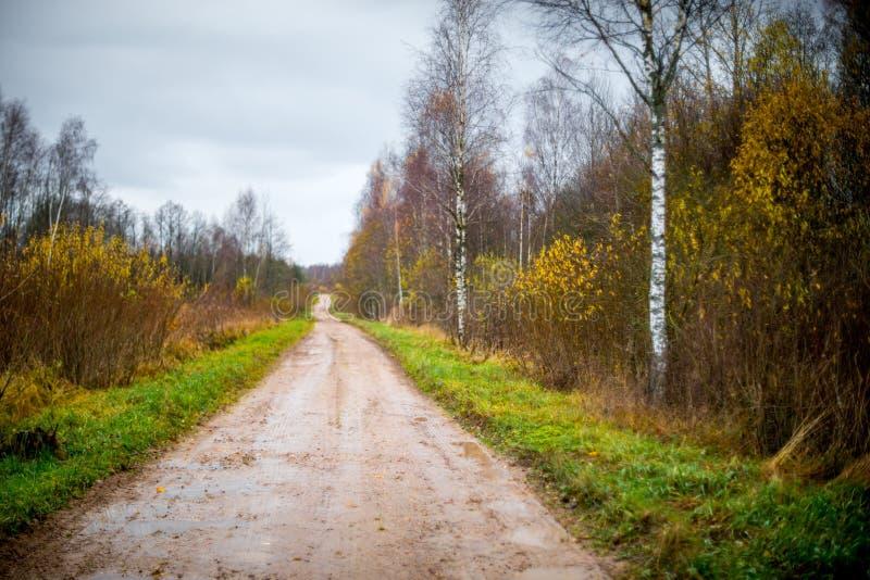 Δασικός δρόμος στα τέλη του φθινοπώρου στοκ εικόνες