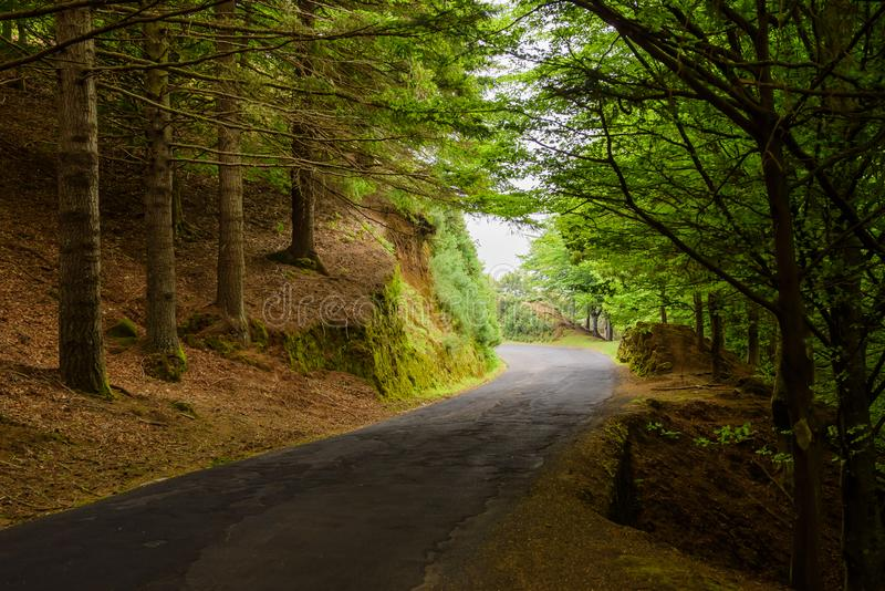 Δασικός δρόμος στο νησί της Μαδέρας, Πορτογαλία στοκ εικόνα