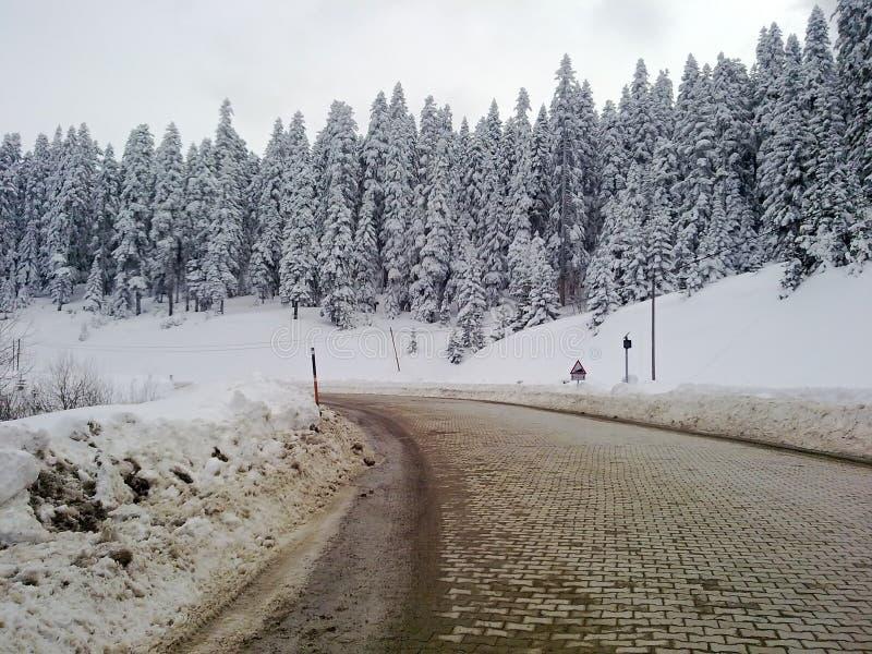 δασικός δρόμος χειμερινό&s στοκ εικόνες