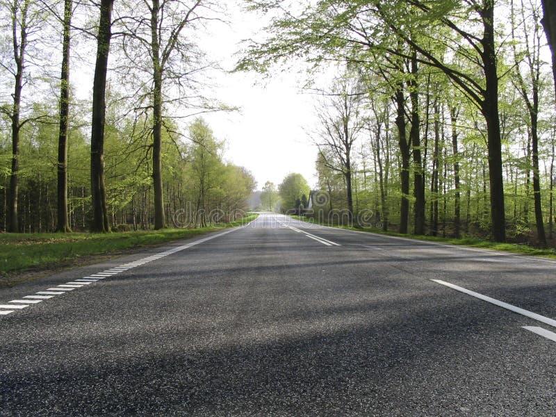 Download δασικός δρόμος στοκ εικόνες. εικόνα από δάση, δρόμος, πράσινος - 122150
