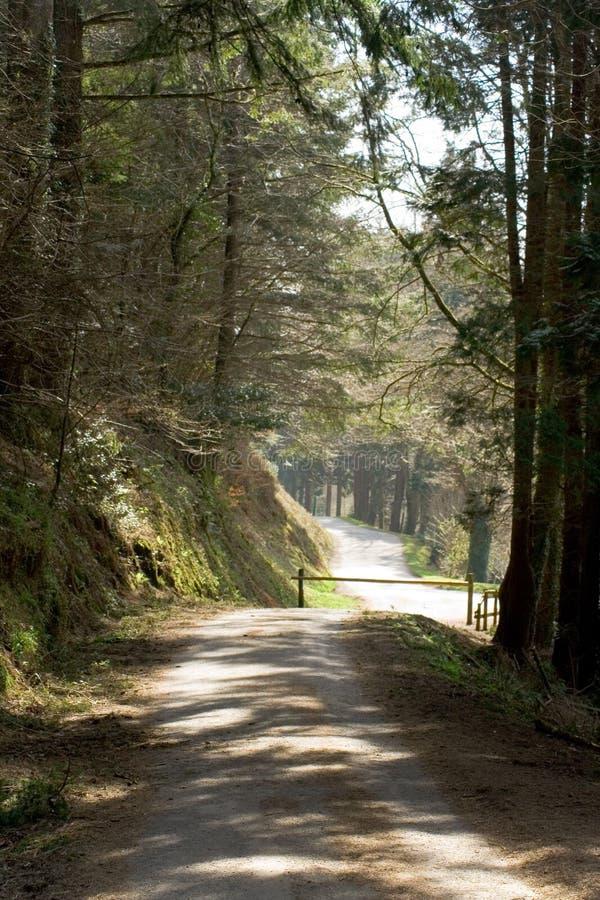 Download δασικός δρόμος στοκ εικόνα. εικόνα από φύλλα, δάση, δέντρα - 2226751