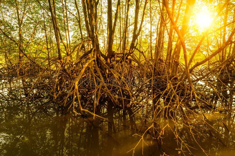 δασικός ελαφρύς ήλιος στοκ φωτογραφίες