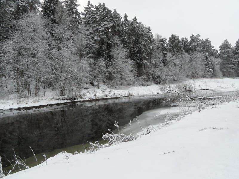 δασικός ηλιόλουστος χειμώνας στοκ φωτογραφίες με δικαίωμα ελεύθερης χρήσης