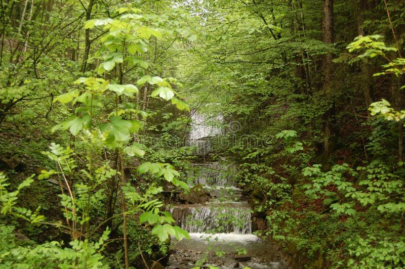 Δασικός καταρράκτης Βαυαρία Γερμανία Tegernsee στοκ φωτογραφίες