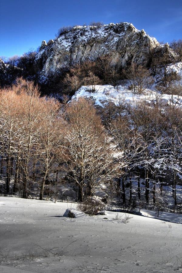 δασικός ορεινός χειμερινός στοκ εικόνες με δικαίωμα ελεύθερης χρήσης