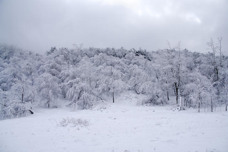 Download δασικός παγωμένος χειμών&alph Στοκ Εικόνες - εικόνα από φυσικός, εποχή: 17053010