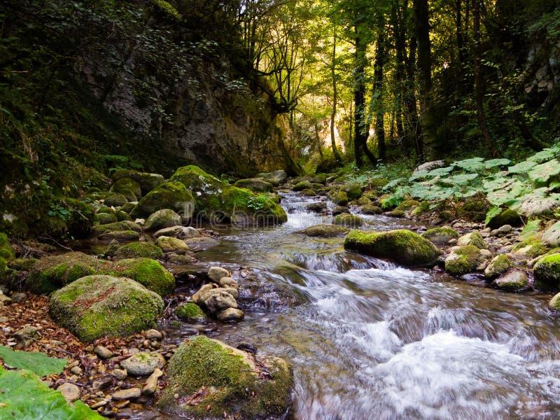 δασικός ποταμός δύσκολ&omicron στοκ εικόνες με δικαίωμα ελεύθερης χρήσης