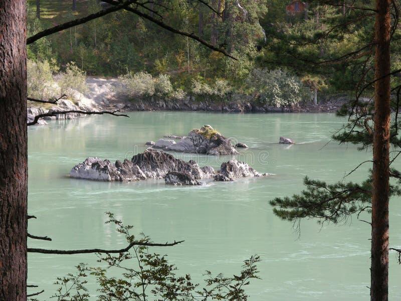 Δασικός ποταμός Katun, έδαφος Altai, Ρωσία, καλοκαίρι στοκ εικόνες