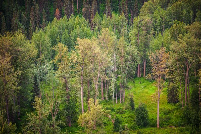 Δασικός πράσινος θερινών κοιλάδων - κοίτη πλημμυρών στοκ εικόνες