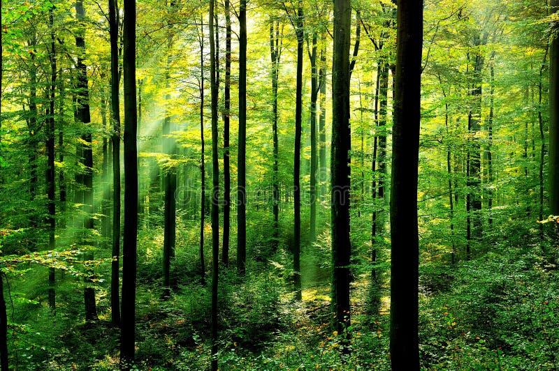 δασικός φρέσκος πράσινος στοκ εικόνα