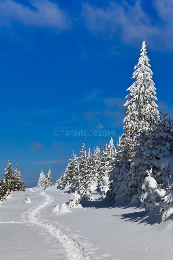 δασικός χειμώνας πεύκων στοκ εικόνα