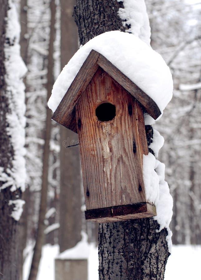 Download δασικός χειμώνας τροφοδ& στοκ εικόνα. εικόνα από άγριος - 22790771