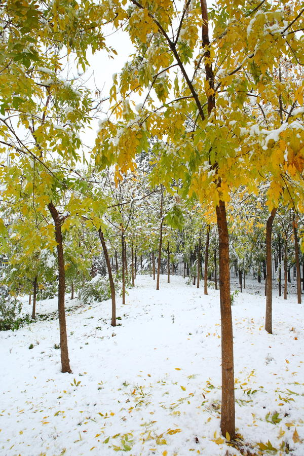 δασικός χειμώνας στοκ φωτογραφία με δικαίωμα ελεύθερης χρήσης