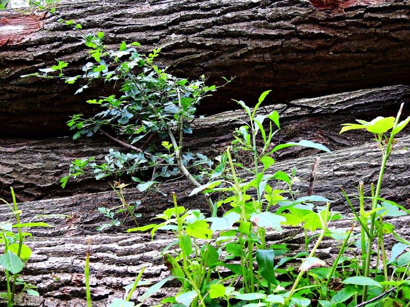 δασικός koh mak δρόμος Δάσος στον τομέα Kluczbork στοκ εικόνες με δικαίωμα ελεύθερης χρήσης
