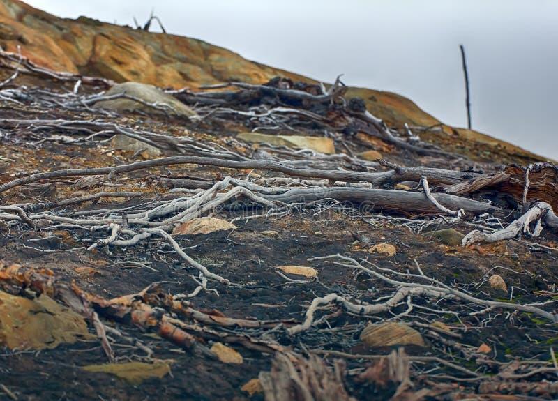 δασικός-tundra που μετατρέπεται σε έρημο μετά από τη μόλυνση του χώματος στοκ φωτογραφίες