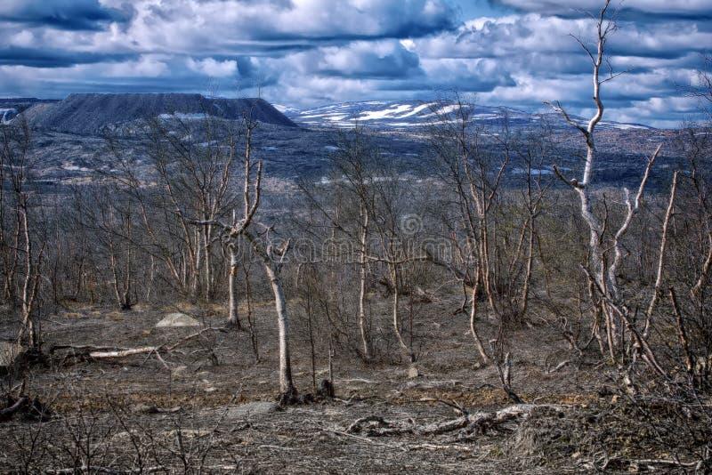 δασικός-tundra που μετατρέπεται σε έρημο μετά από τη μόλυνση του χώματος στοκ φωτογραφία με δικαίωμα ελεύθερης χρήσης